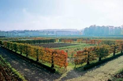 Potager-du-roi-Grand-Parc-de-Versailles-017-jdg-AGPV